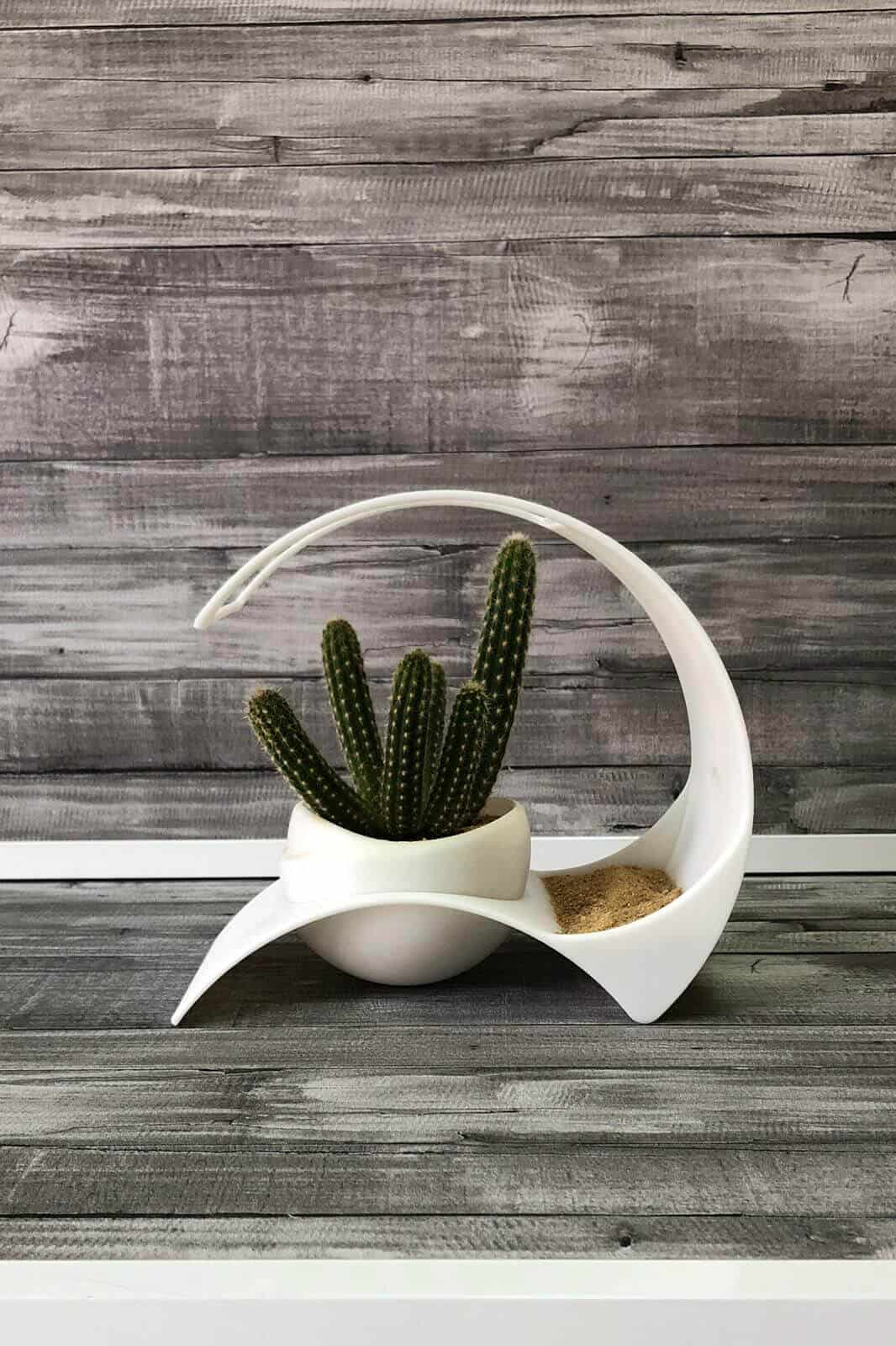 Macetero cactus
